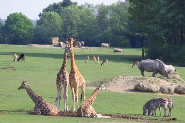 Safari en Normandie
